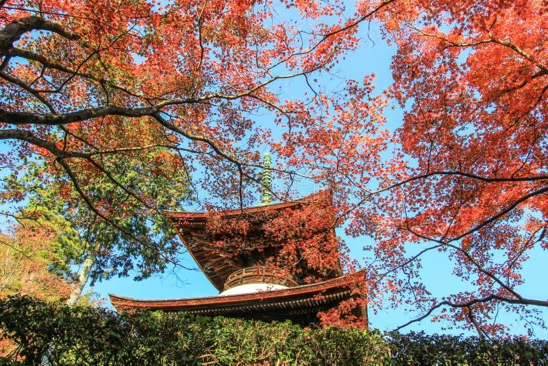 Follaje de otoño y la pagoda en el templo de Jojakko-ji foto de archivo libre de regalías