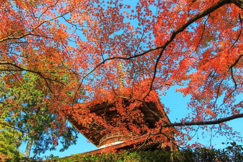 Follaje de otoño y la pagoda en el templo de Jojakko-ji imagenes de archivo