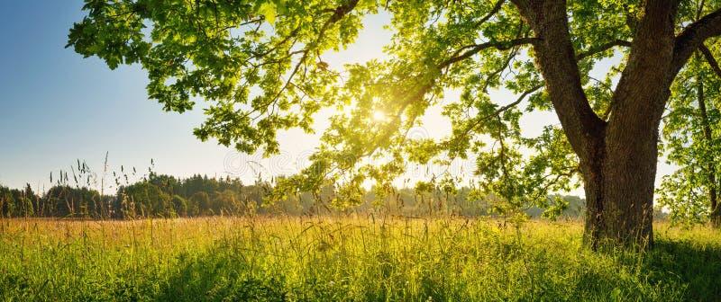 Follaje del árbol en luz de la mañana imágenes de archivo libres de regalías