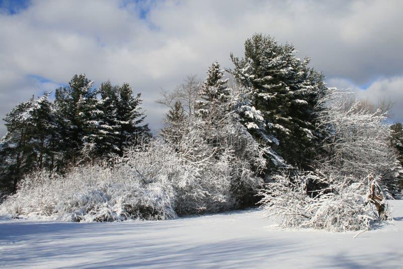 Follaje del invierno imagen de archivo