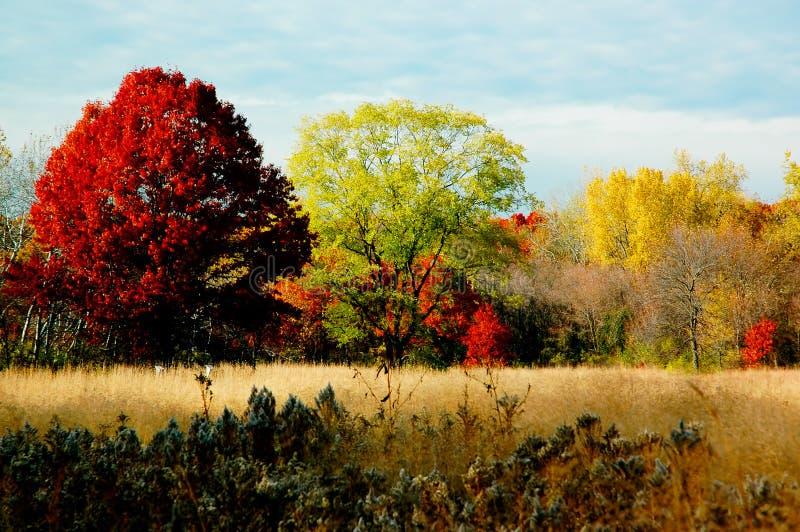 Follaje del otoño: árboles grandes. imagen de archivo libre de regalías