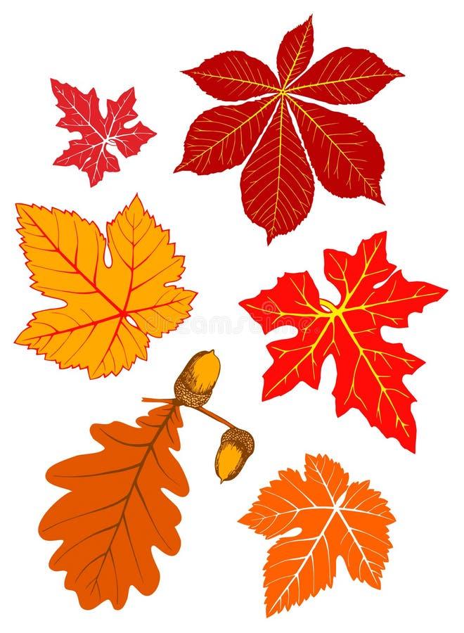 Follaje del otoño ilustración del vector