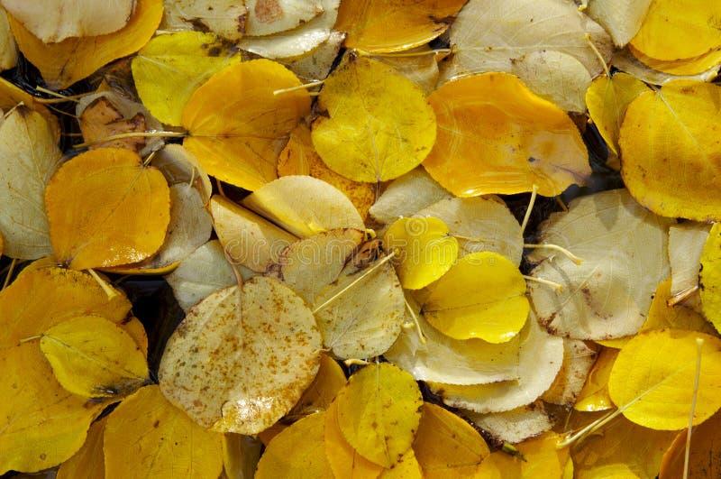 Follaje del otoño imagen de archivo