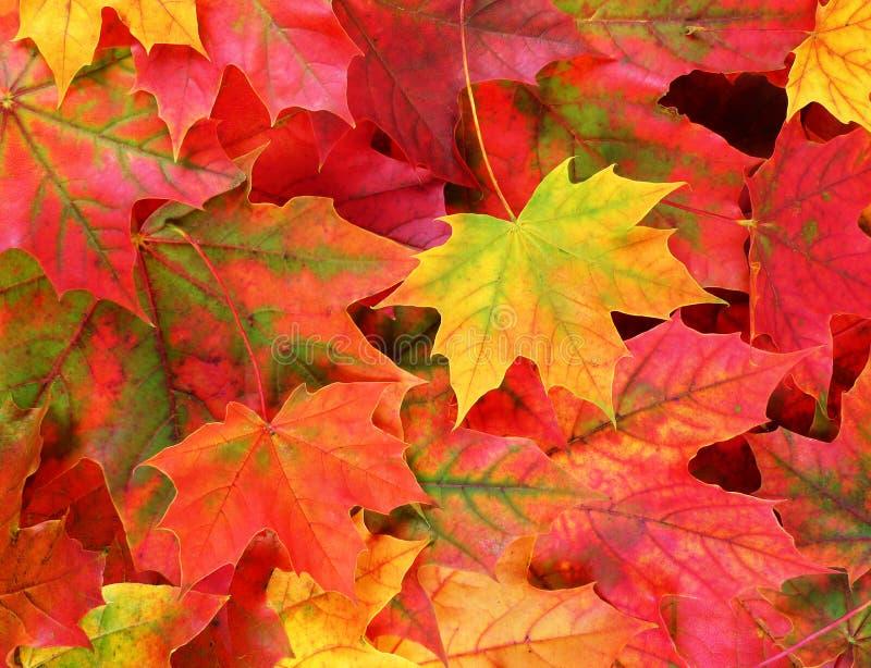 Follaje del otoño - fondo fotografía de archivo libre de regalías