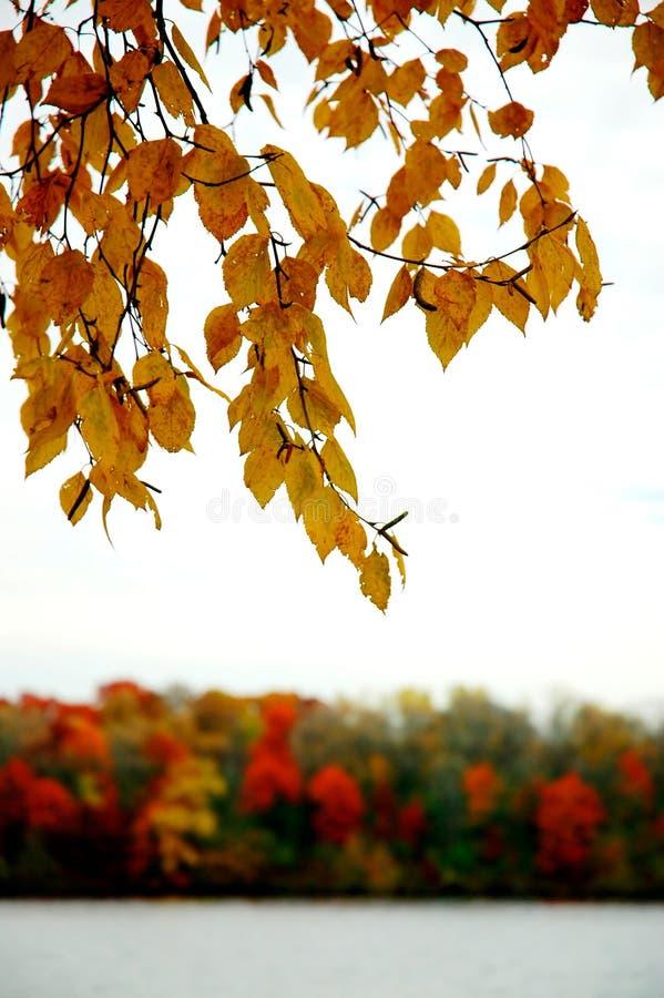 Follaje del otoño a lo largo de un río. foto de archivo