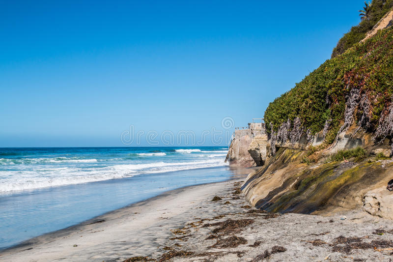 Follaje en el acantilado en la playa del ` s de los faros en Encinitas, California fotografía de archivo libre de regalías