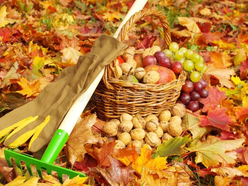 Follaje, guantes que cultivan un huerto, rastrillos y frutas fotografía de archivo