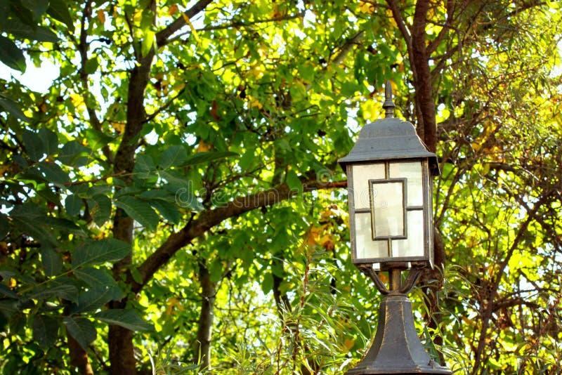 Follaje hermoso del árbol, colores brillantes jugosos - amarillos, verde, naranja, primer de las hojas del árbol, imagenes de archivo