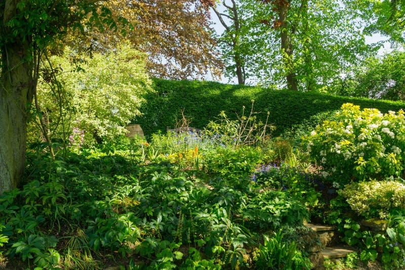 Follaje rico enorme en un jardín bien guardado fotos de archivo