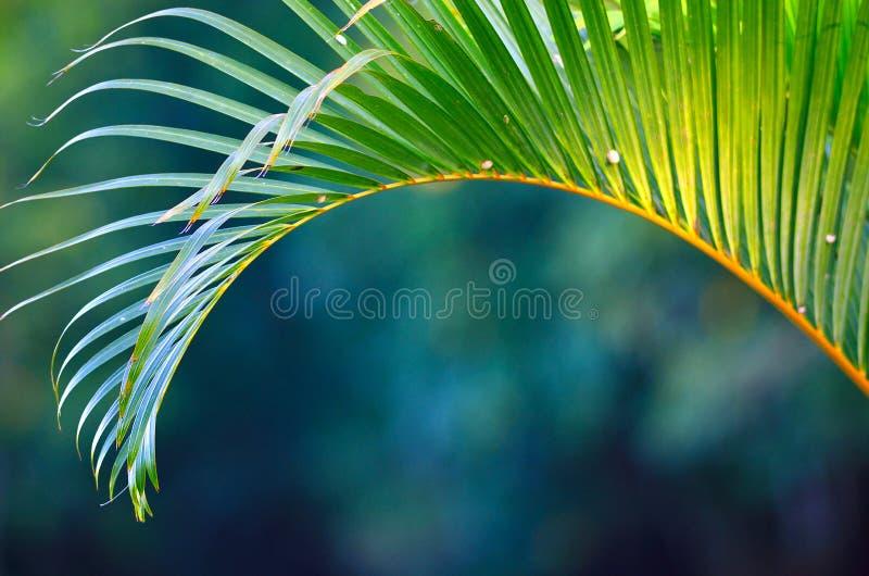 Follaje tropical fotos de archivo libres de regalías