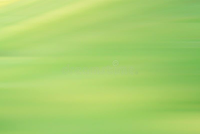 Follaje verde fresco de la primavera de la falta de definición foto de archivo