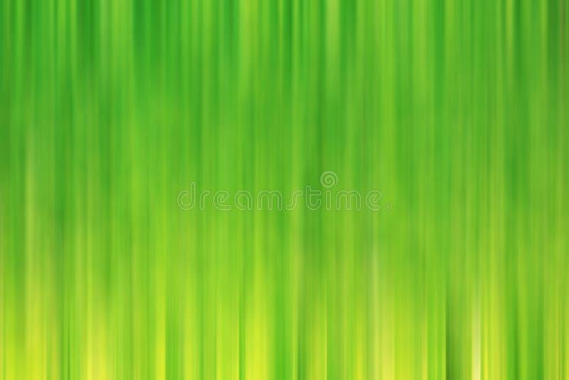 Follaje verde fresco de la primavera de la falta de definición fotografía de archivo libre de regalías