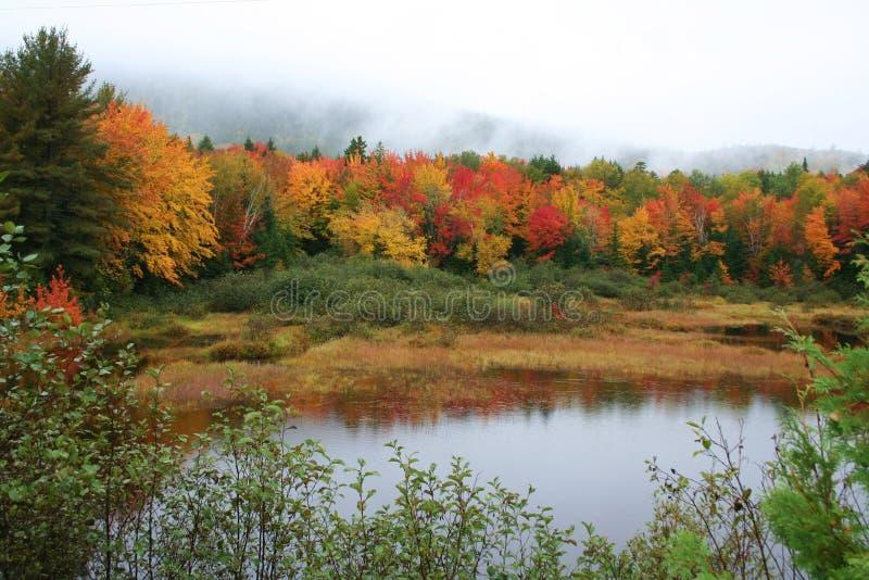 Follaje y charca de caída de Maine foto de archivo