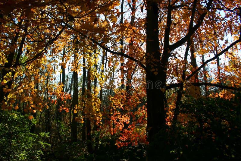 Follaje y sombras del otoño imágenes de archivo libres de regalías