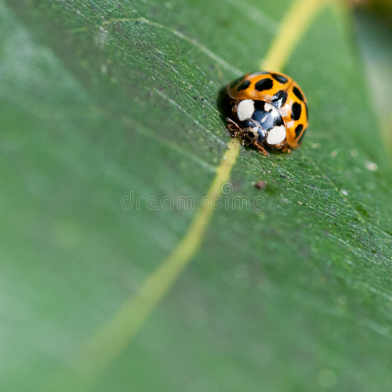 Download Follow The Line stock photo. Image of leaf, ladybug, spotted - 28044192