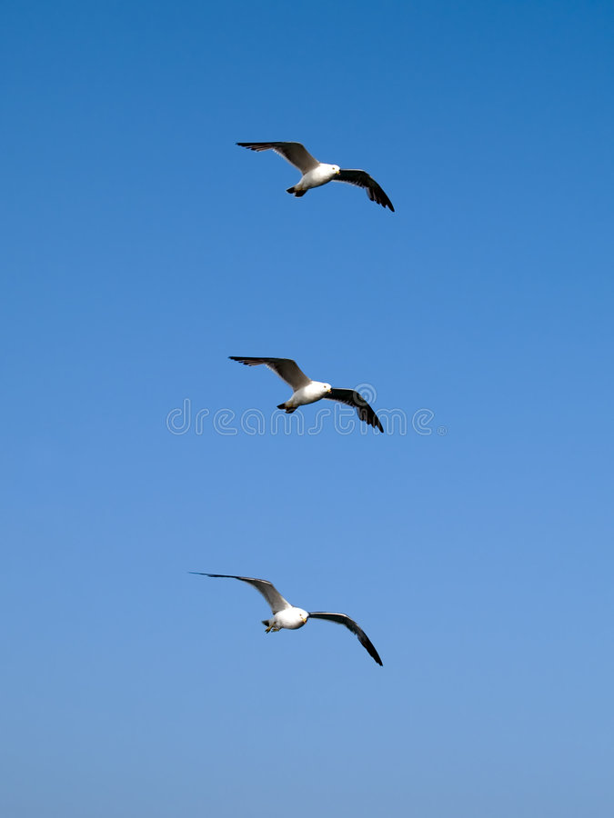Free Follow The Leader - Team Concept Stock Image - 4991681