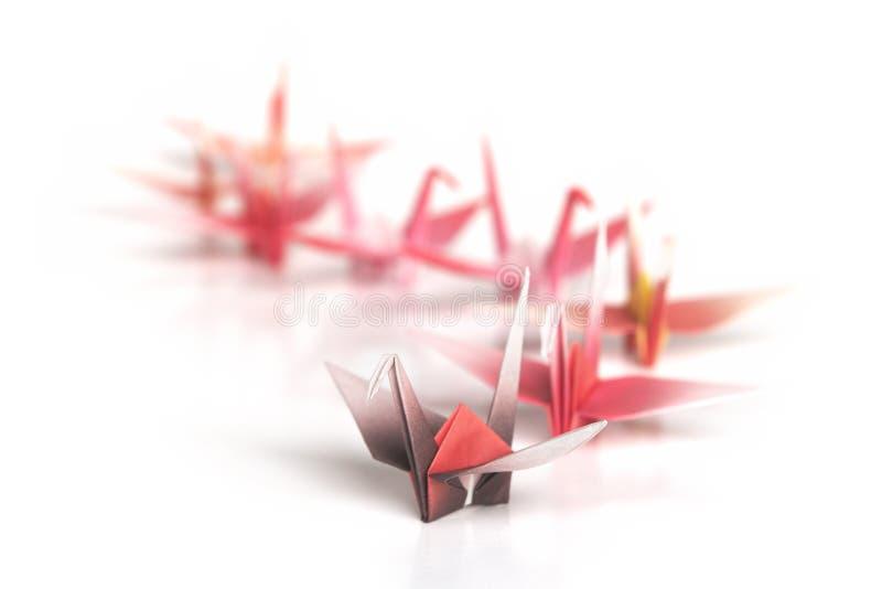 Download Followers stock photo. Image of leader, crane, queue, bird - 3925496