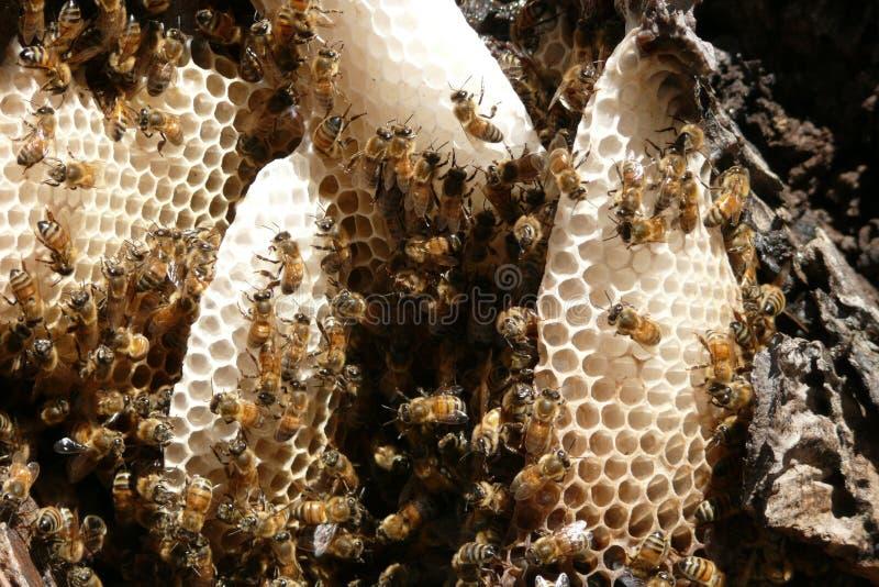 fonctionnement d'abeille photo libre de droits