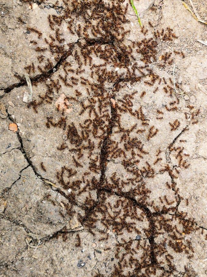 Fonctionnement de colonie de fourmi image stock