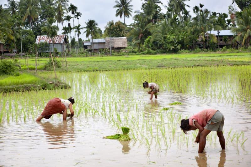 Fonctionnement de fermier image libre de droits