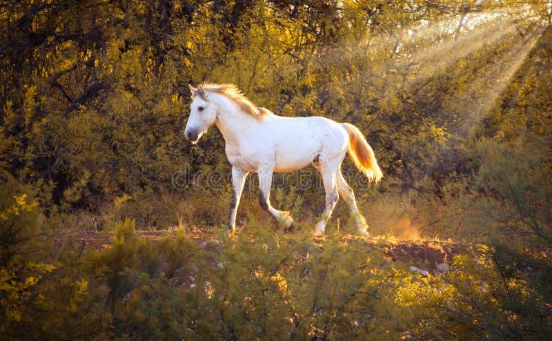 Fonctionnement sauvage de cheval de mustang images stock