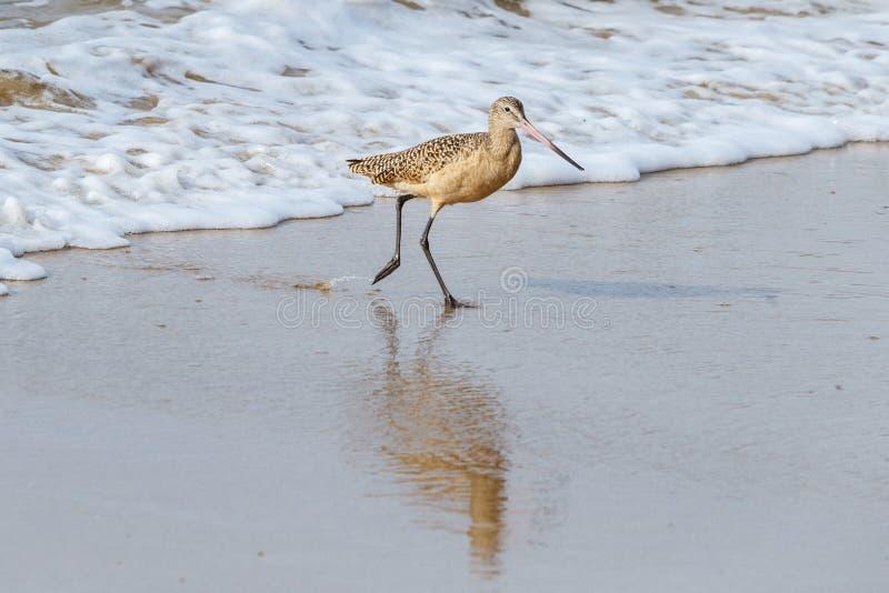 Fonctionnement terrestre marbré de barge de vague dans le Laguna Beach, la Californie image stock