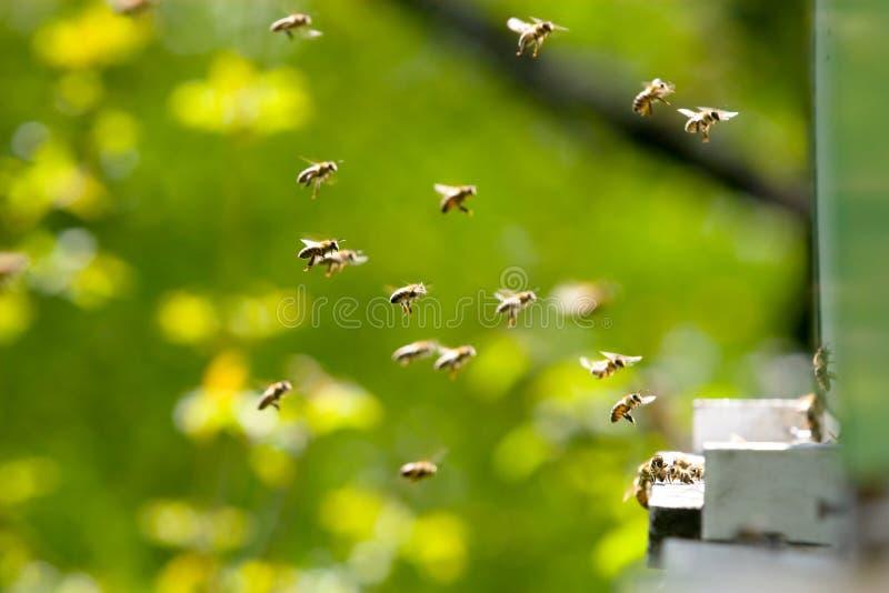 fonctionner d'abeilles image libre de droits