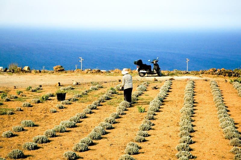 Fonctionner dans le domaine en Sicile photographie stock libre de droits