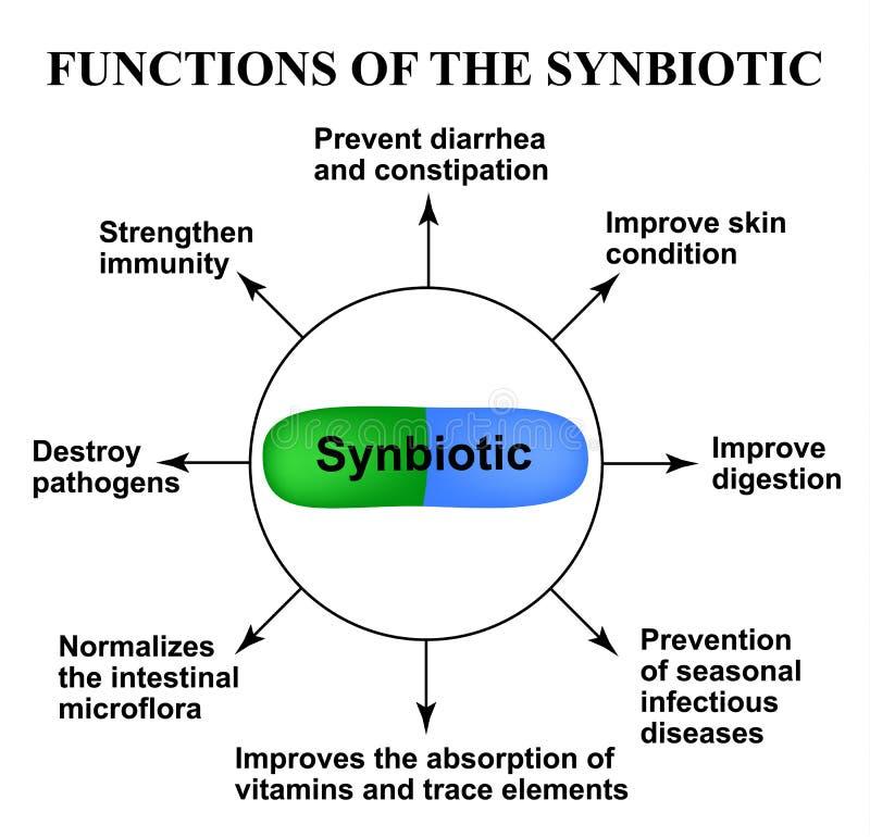 Fonctions du synbiotic probiotic, prebiotic Dysbacteriosis Infographie Illustration de vecteur sur d'isolement illustration libre de droits