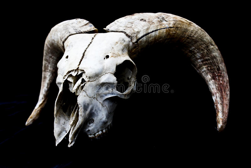 Fond à cornes de noir de Ram Sheep Skull Head On images libres de droits