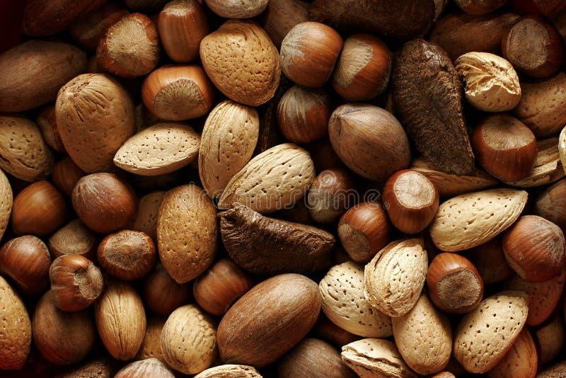 Fond à noix photo stock
