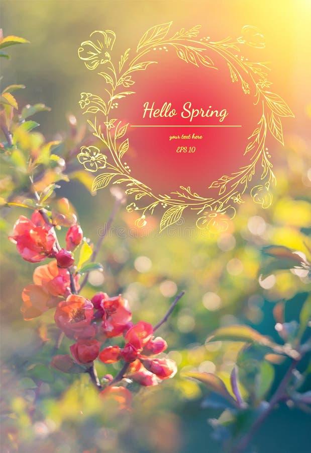 Fond élégant de ressort avec le coing rouge Bonjour ressort Carte de voeux d'aquarelle des fleurs Illustration de vecteur image stock