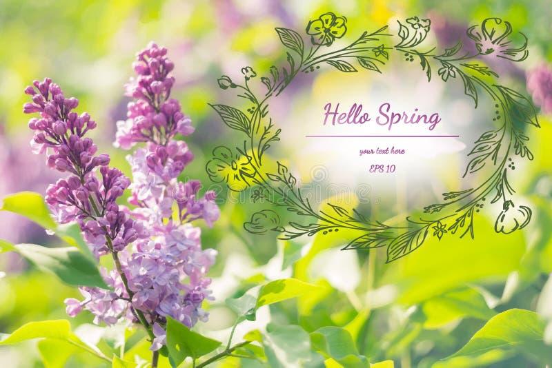 Fond élégant de ressort avec les fleurs lilas Bonjour ressort Carte de voeux d'aquarelle des fleurs Illustration de vecteur images stock