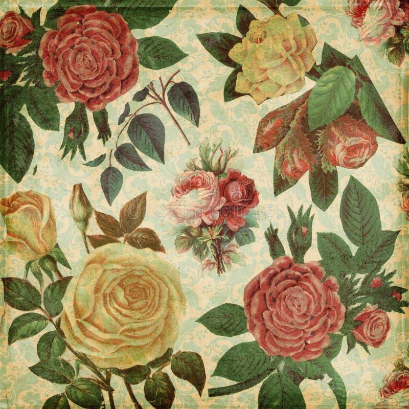 Fond élégant minable de roses botaniques de cru illustration de vecteur