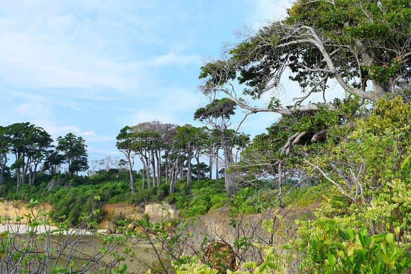 Fond abstrait d'environnement naturel de verdure tout autour - arbres, arbustes, et terre de Forest Green - image libre de droits