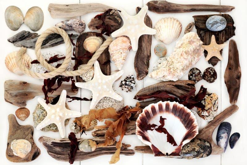 Fond abstrait de bois de flottage, de coquillage et d'algue photos stock