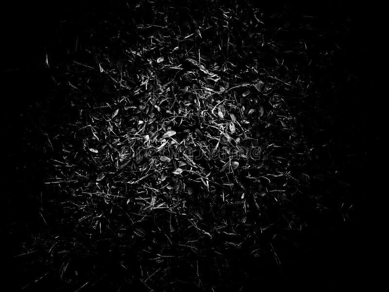 Fond abstrait de feuilles d'automne sur noir et blanc photos stock