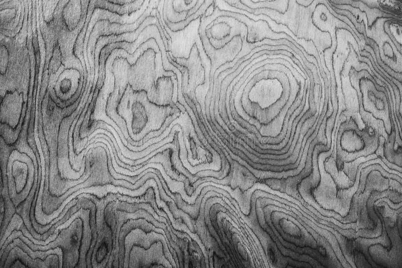 Fond abstrait de la texture de la circonférence du tre photos libres de droits