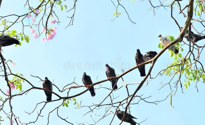 Fond abstrait de nature avec des oiseaux et des arbres image libre de droits