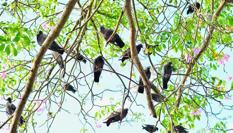 Fond abstrait de nature avec des oiseaux et des arbres photographie stock