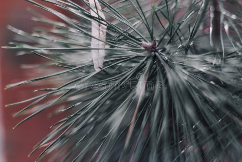 Fond abstrait de Noël avec le backround brouillé de bokeh photographie stock libre de droits