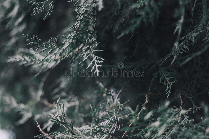 Fond abstrait de Noël avec le backround brouillé de bokeh photo libre de droits