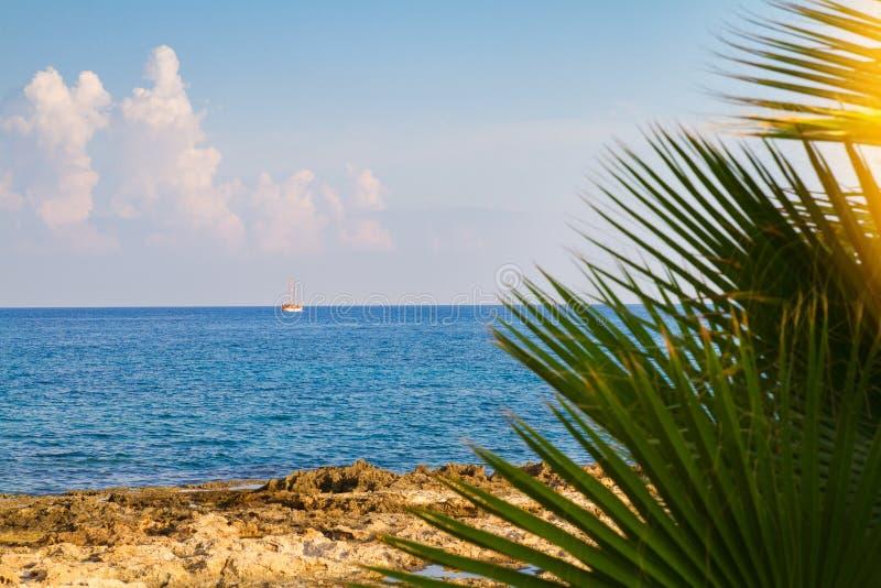 Fond abstrait de plage - ciel bleu et mer aux ombres du palmier Copiez l'espace, concept de vacances d'été La plage de mer détend photos stock