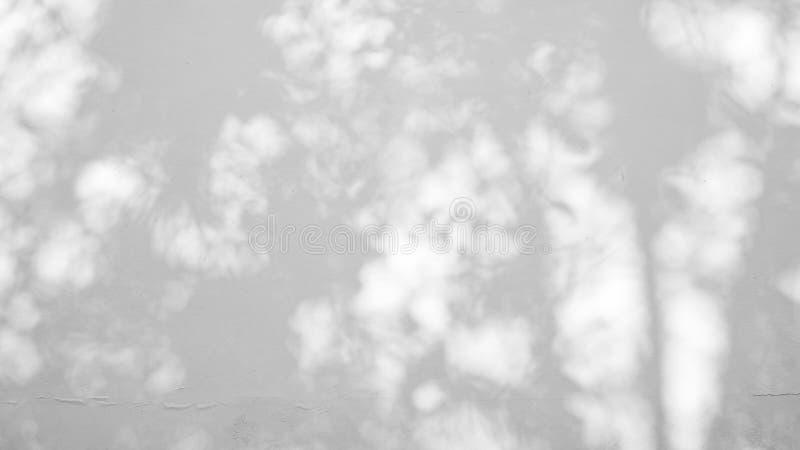 Fond abstrait de tache floue, ombre grise brouill?e des feuilles d'un arbre sur le mur blanc de ciment de surface en b?ton de cou photo stock