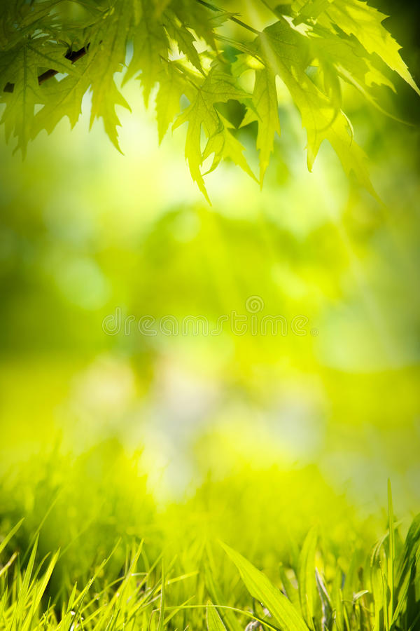 Fond abstrait de vert de nature de source photos libres de droits