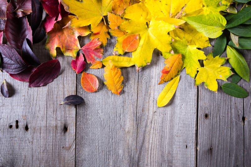 Fond abstrait des feuilles d'automne colorées photo stock