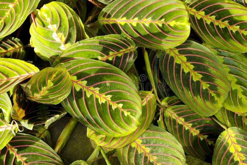 Fond abstrait des feuilles vertes fraîches photo libre de droits