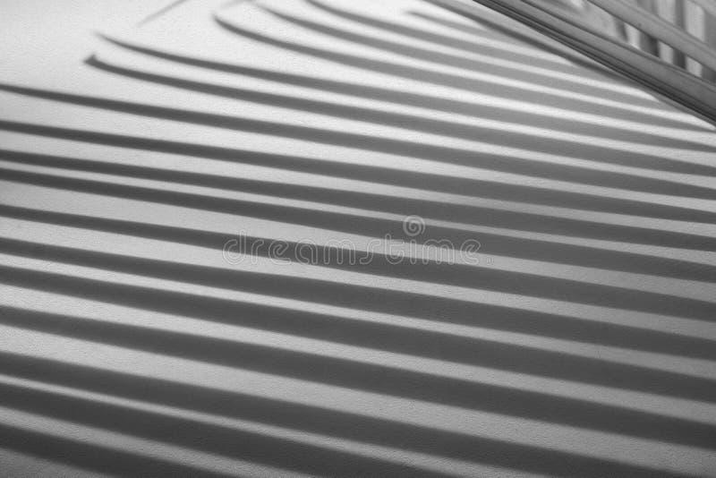 Fond abstrait des palmettes d'ombre sur le mur rugueux en béton de texture image libre de droits