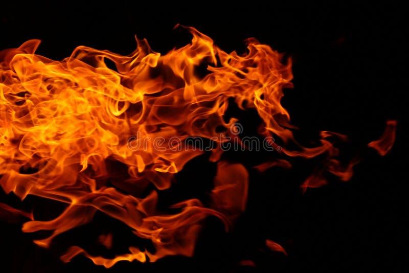 Fond abstrait du feu campant sauvage de buisson images libres de droits