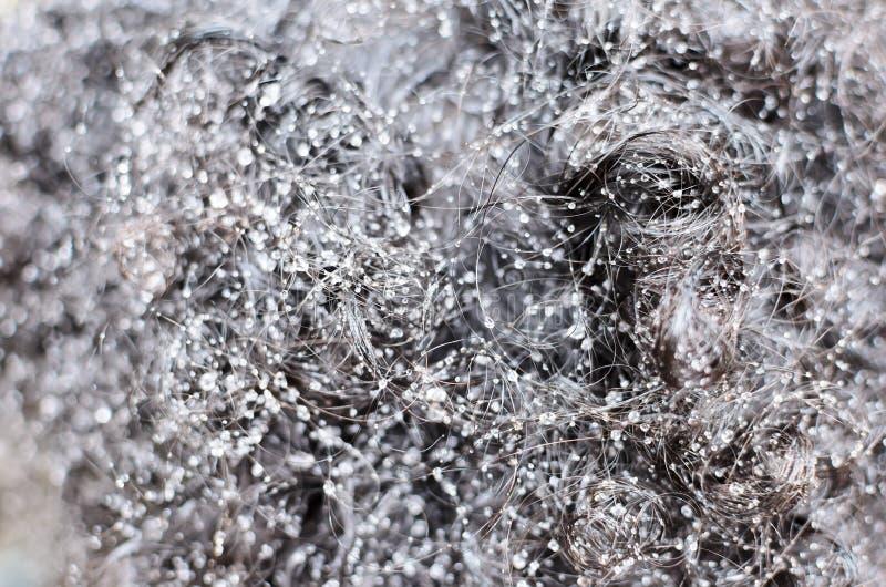 Fond abstrait - gouttes de l'eau dans les cheveux noirs bouclés photographie stock libre de droits